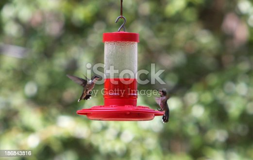 two hummingbirds hovering near a red nectar feeder in a backyardmore hummingbirds