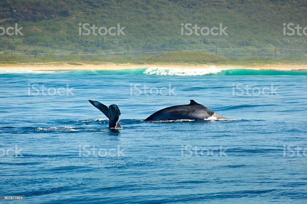 Two Humpback Whale in Na Pali Coast of Kauai, Hawaii stock photo