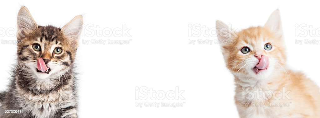 Two Hungry Kittens Horizontal Banner stock photo