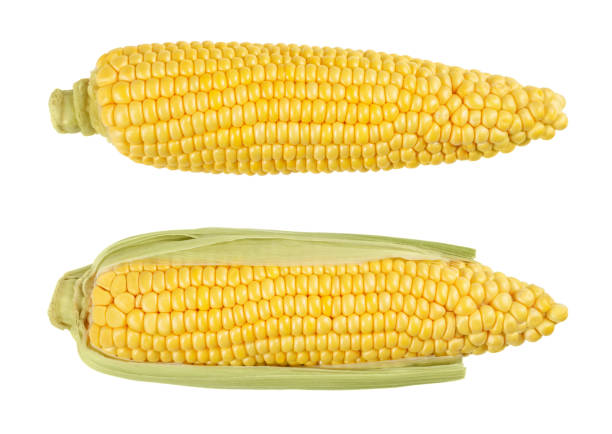Two husked cobs of sweet corn, isolated, over white Two husked cobs of sweet corn, also sugar corn. Fresh vegetable with high sugar content. Immature harvested, in milk stage. Zea mays. Isolated, food photo, close up, from above, on white background. sweetcorn stock pictures, royalty-free photos & images