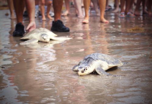 sea turtle rescue on the texas gulf coast