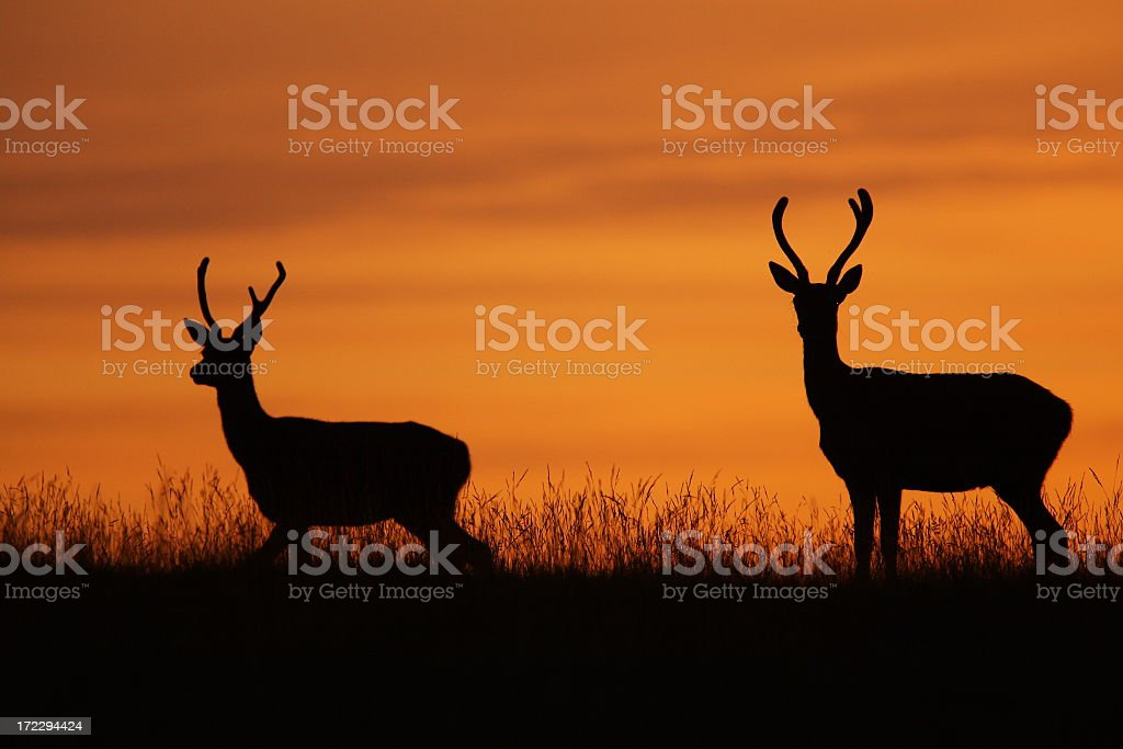 Two illustrated stags with large antlers royalty-free stock photo