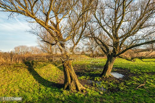 1034754000istockphoto Two inclined trees with bare branches in the light of the setting sun 1127724695