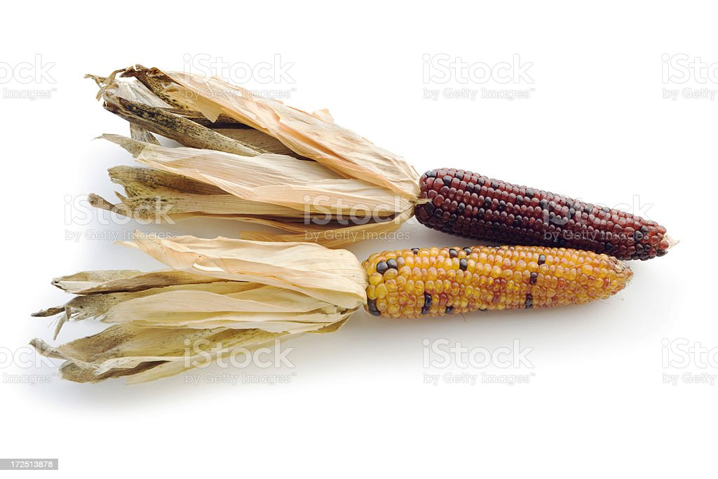 Two Indian Corn Cobs royalty-free stock photo
