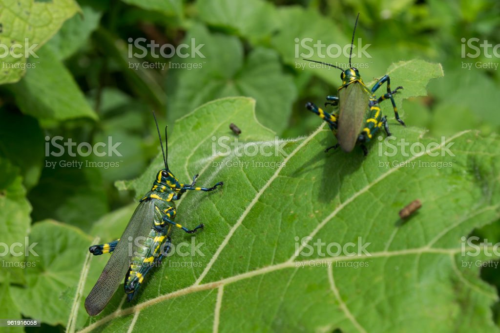 two insects stock photo