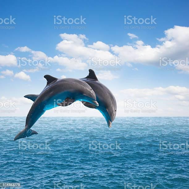 Two jumping dolphins picture id514343279?b=1&k=6&m=514343279&s=612x612&h=j e4murmq1d9ixtcnhfurefd9xaairumac41fjqvwyu=