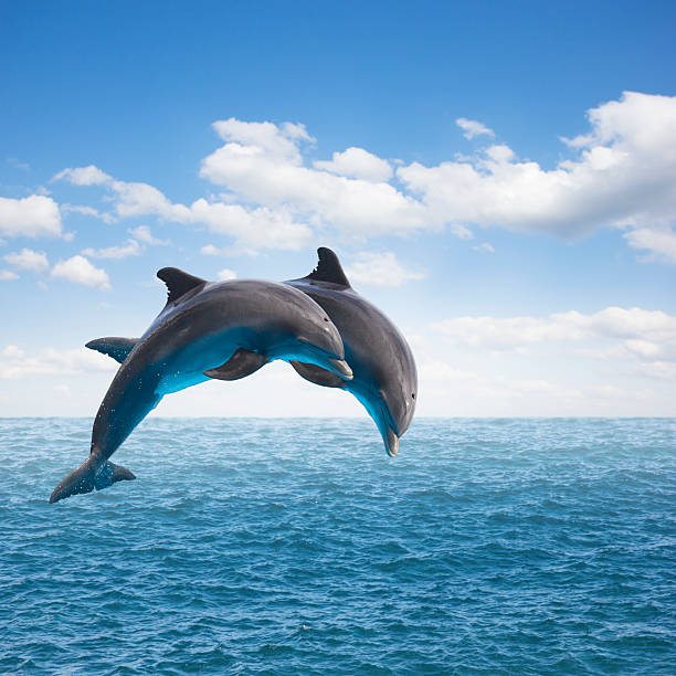 two  jumping dolphins two jumping dolphins, seascape with deep  ocean  waters and cloudscape dolphin stock pictures, royalty-free photos & images