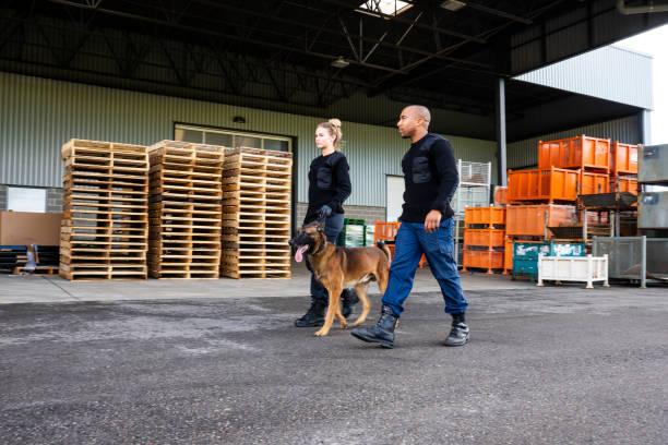 Two k9 security professionals with a belgian malinois on patrol picture id1050263970?b=1&k=6&m=1050263970&s=612x612&w=0&h=dwtszvjwpr i7givzxo99vzl7qw8o9xeusb7b0ltpjm=