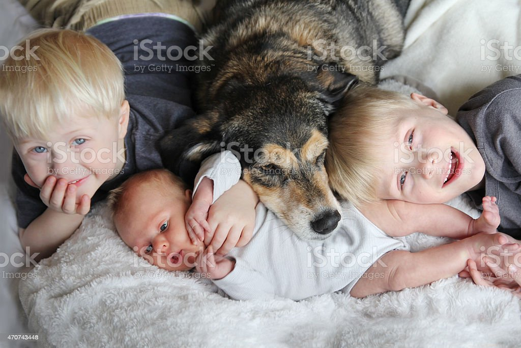 Two kids and a baby snuggling with a dog in bed stock photo
