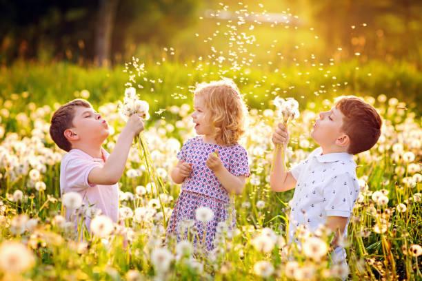 Zwei Kinder-Jungen und ein kleines Mädchen, die im Sommer auf einem Löwenzahnblumen auf der Natur baufwehen. Glückliches gesundes Kleinkind und Schulkinder mit Blowballs, Spaß haben. Familie dreier Liebe, zusammen – Foto