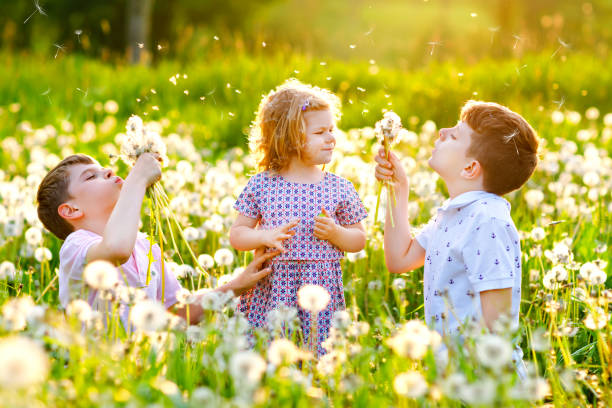 Two kids boys and little baby girl blowing on a dandelion flowers on the nature in the summer. Happy healthy toddler and school children with blowballs, having fun. Family of three love, together stock photo