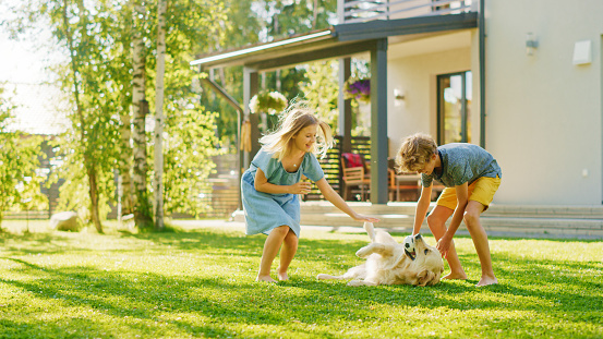 Two Kids Have fun with Their Handsome Golden Retriever Dog on the Backyard Lawn. They Pet, Play, Scratch it. Happy Pedigree Dog Holds Toy ball in Jaws. Idyllic Suburb House in the Summer