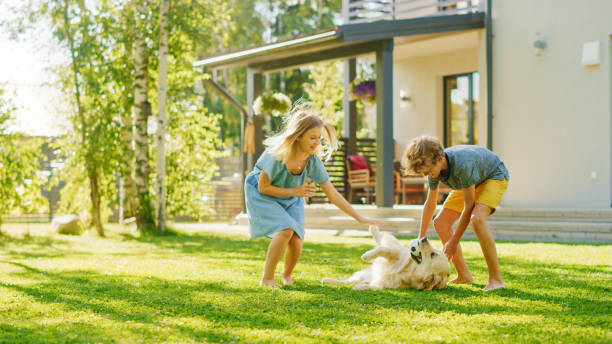 Two Kids Have fun with Their Handsome Golden Retriever Dog on the Backyard Lawn. They Pet, Play, Scratch it. Happy Pedigree Dog Holds Toy ball in Jaws. Idyllic Suburb House in the Summer stock photo