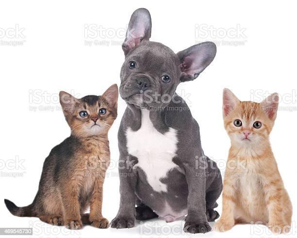Two kitten and puppy picture id469545730?b=1&k=6&m=469545730&s=612x612&h=c nadtfxjlnsczedlljfxngtoodfrcpje4lzs0nunhi=