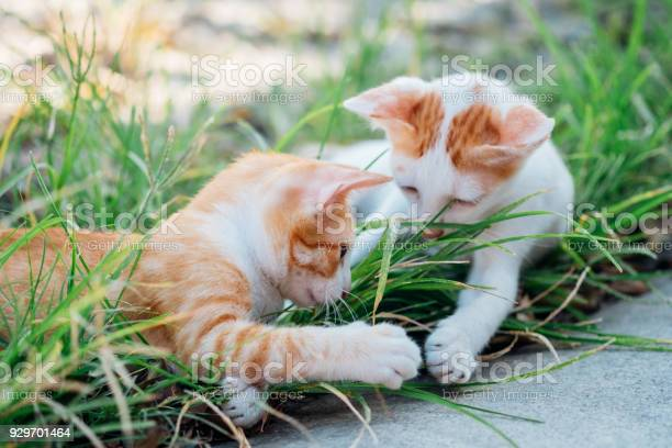 Two kitten sweet with handle hands together on grass picture id929701464?b=1&k=6&m=929701464&s=612x612&h=reniurkd lms7hqihcv68njwwg8ipmnxyjnhei6mgjg=