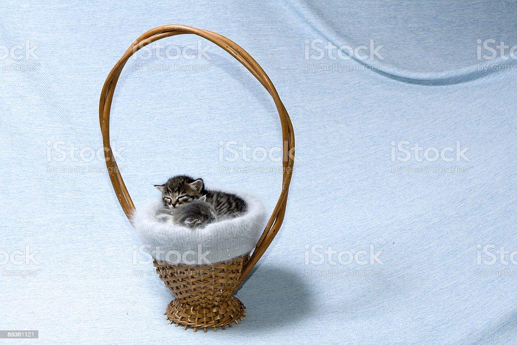 Two kittens at basket royalty free stockfoto