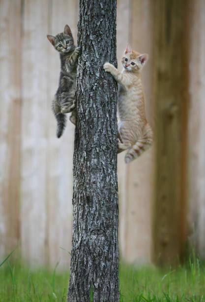 Zwei Kätzchen klettern auf einen Baum – Foto