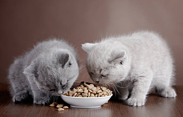 Two kittens eating dinner out of a shared bowl picture id160642244?b=1&k=6&m=160642244&s=612x612&w=0&h=suznrajxcbnic0hsdqx8zbldc5wpasd5k5eidoupr7g=