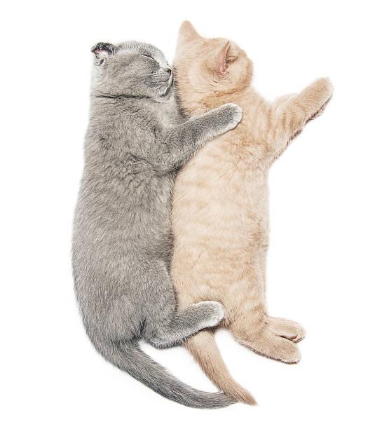 Two kittens hugging sleep picture id502415973?b=1&k=6&m=502415973&s=612x612&w=0&h=cxallkyspzgah4tyazrdgvvadltv1pdrra3be npliq=