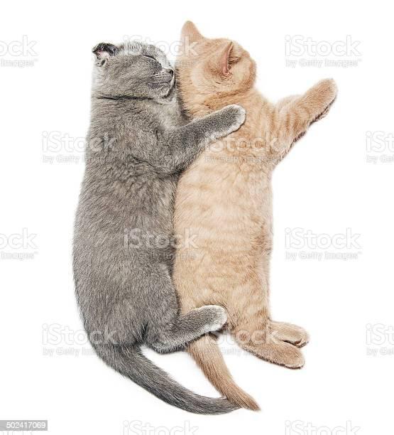 Two kittens hugging sleep picture id502417069?b=1&k=6&m=502417069&s=612x612&h=acd4 y4dxeb1qo5sdgbgc rsc4rnj7ps am8sdhkv s=