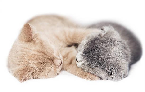 Two kittens hugging sleep picture id502419691?b=1&k=6&m=502419691&s=612x612&w=0&h=zxovdwrw2krka o4lj2wdj3lgj9saninoxiebp 63ow=