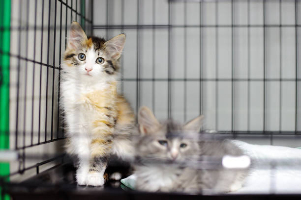 Two kittens in a cage in an animal shelter stock photo