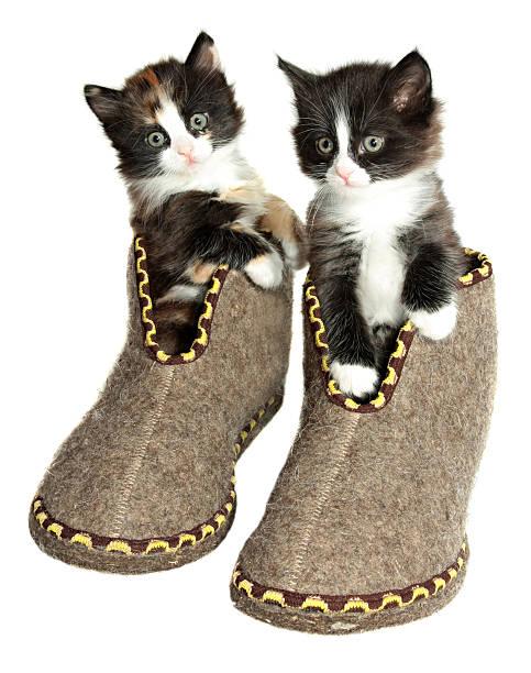 Two kittens in sit valenoks stock photo