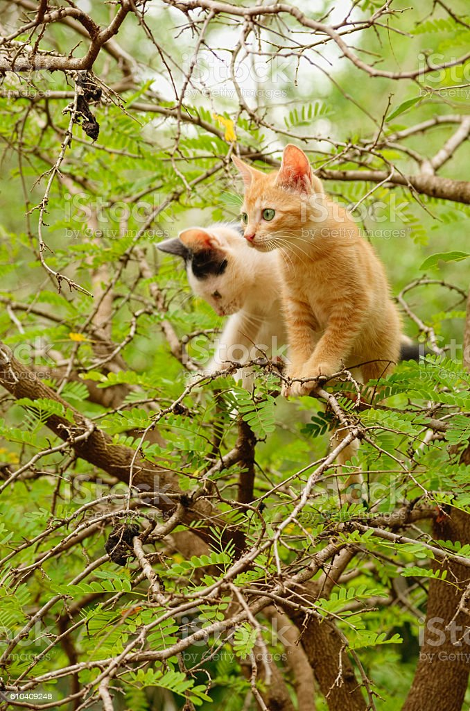 Two kittens in the tree stock photo