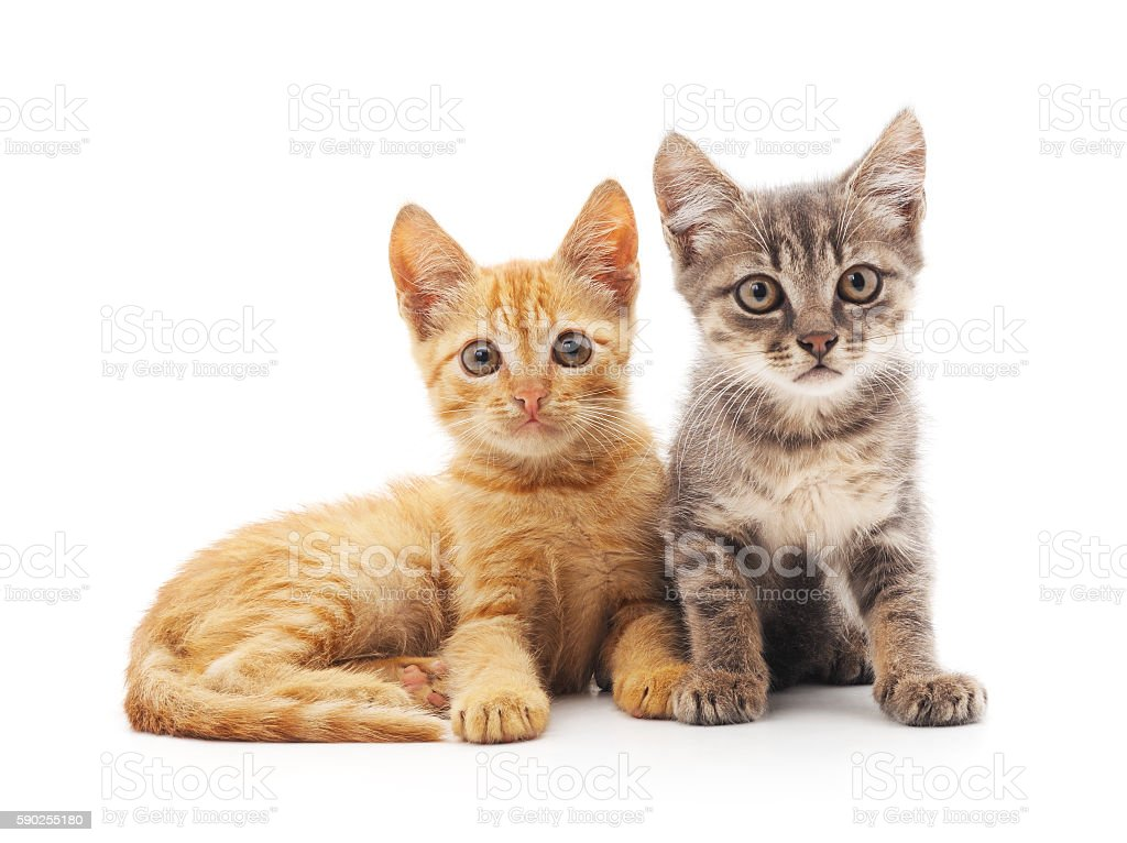 Dos kittens. - foto de stock