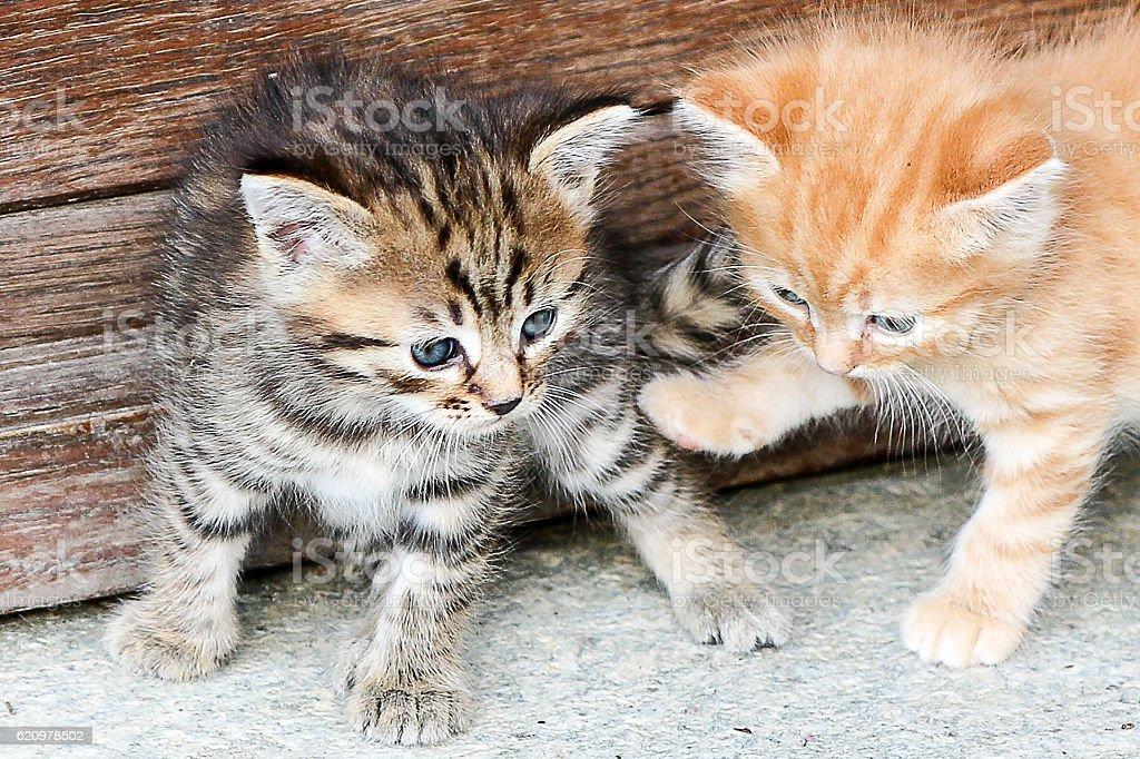 Duas que os gatinhos tocando juntos foto royalty-free