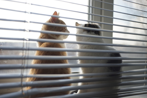 Two kittens rest on a sunny windowsill with blinds, soft blurred photo.