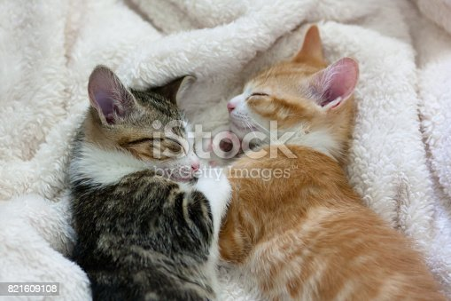 two cats sleeping facing each other