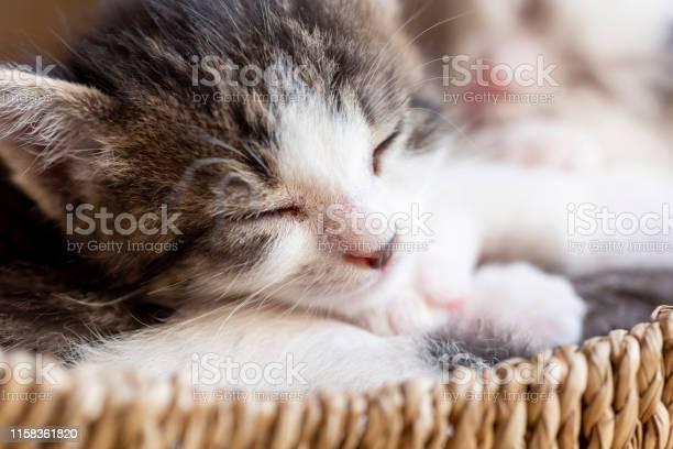 Two kittens sleeping in a wicker basket picture id1158361820?b=1&k=6&m=1158361820&s=612x612&h=tzuv5js1tecbyuqmp0idbhlp5xm qic2gy uqz6nnms=