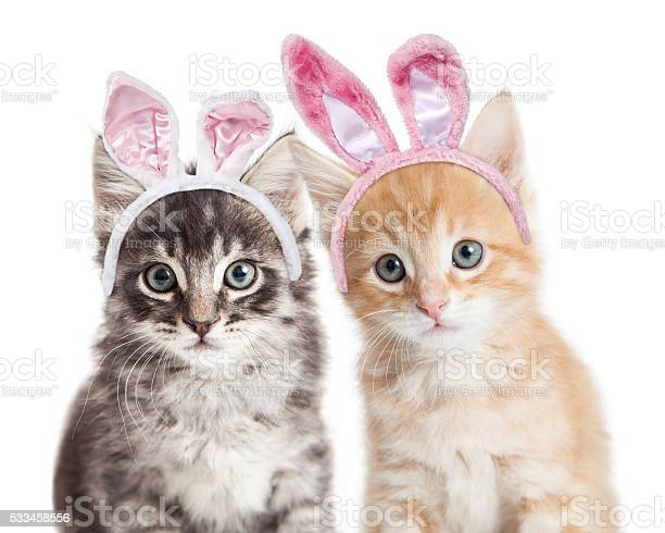 Two kittens wearing easter bunny ears picture id533458556?b=1&k=6&m=533458556&s=612x612&h=tzijjislgzvggfwesd2efyhjep k9os71miydobo4ra=