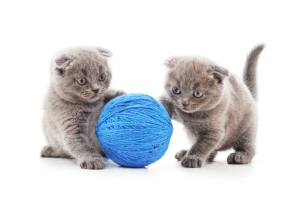 Two kittens with balls picture id1148860768?b=1&k=6&m=1148860768&s=612x612&w=0&h=tpsvc6qwycu7wdiiyef6og j2ybrssnlhuoh5oe6cp0=