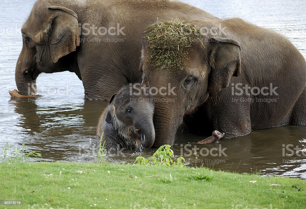 Two larger elephants with a baby elephant royalty-free stock photo