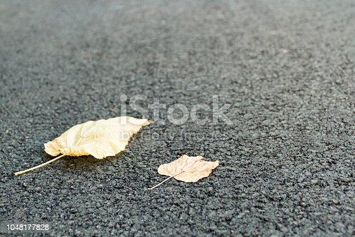 istock Two leaf on asphalt 1048177828