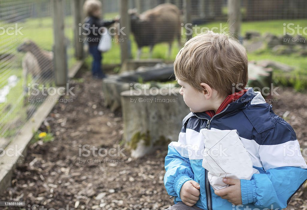 Two little boys feeding animals in zoo royalty-free stock photo