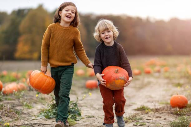 Two little boys having fun in a pumpkin patch stock photo