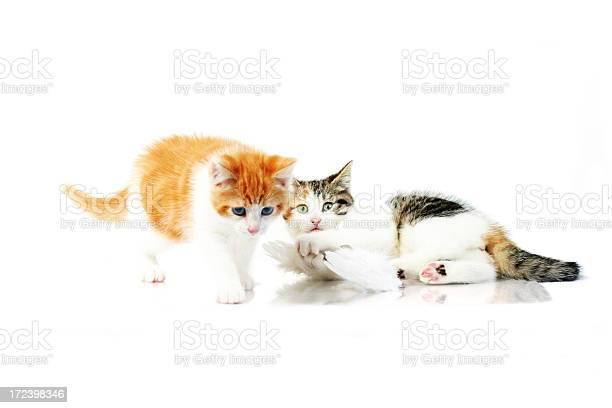 Two little cats picture id172398346?b=1&k=6&m=172398346&s=612x612&h=w4qz dwxj0v hz7nskd6buwnaz5sf4a7tvoeljvya 4=