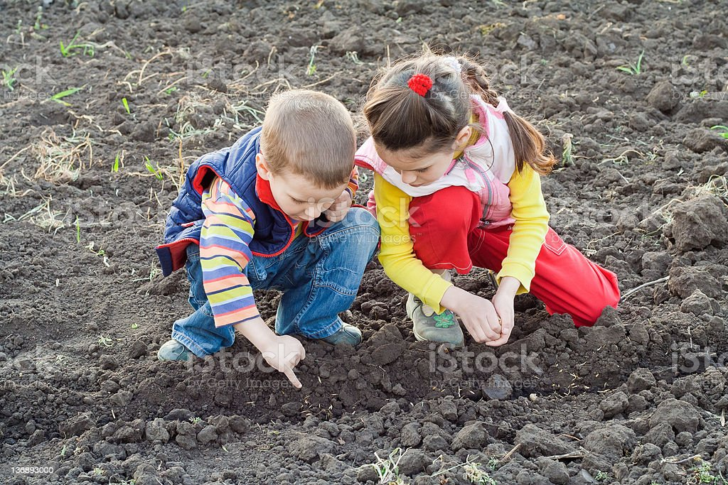 Two little children planting seeds on the field royalty-free stock photo