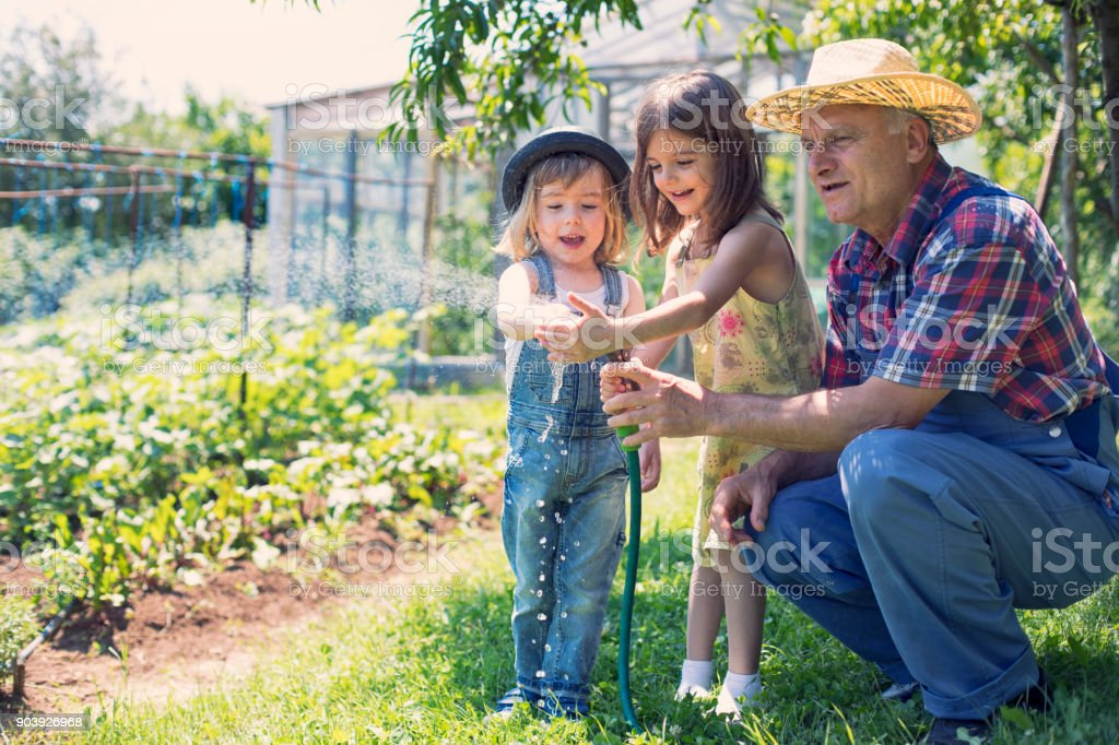 Two little children watering with his grandfather in garden stock photo