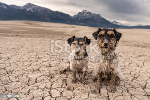 885056264 istock photo two little dogs are sitting in a sandy desert in front of mountains - cute dirty Jack Russell Terrier 947846980
