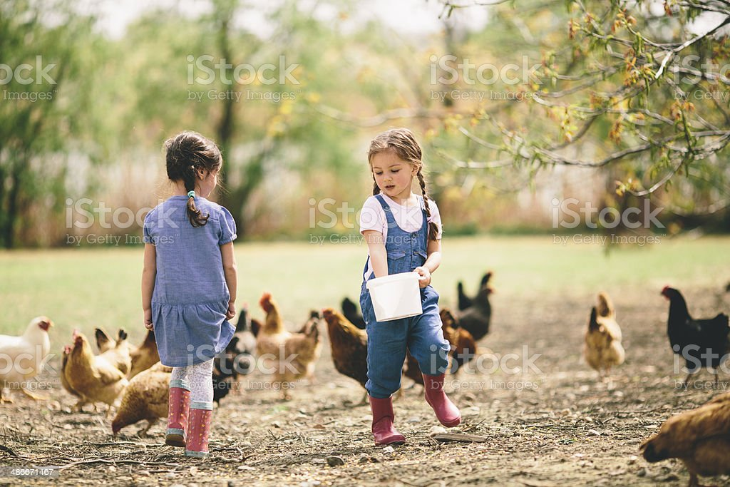 Two little girl feeding chickens stock photo