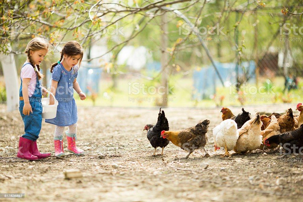 Zwei kleine Mädchen Hühner füttert – Foto