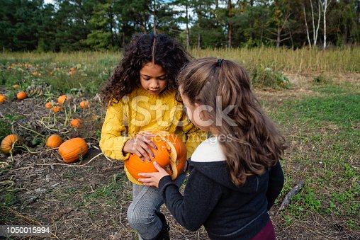 Two adorable mixed-race little girls of elementary age picking pumpkins for Halloween. Both are wearing warm clothes on a sunny autumn day. They are looking inside a broken one left on the field. Horizontal three quarter length outdoors shot with copy space.