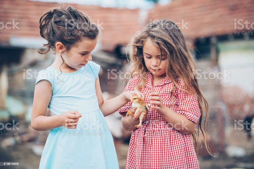 Two little girls with baby chicken stock photo