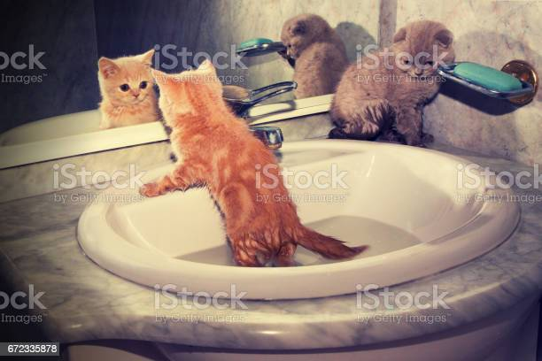 Two little kittens bathing in the sink red kitten looking at mirror picture id672335878?b=1&k=6&m=672335878&s=612x612&h=mbjue0e1qophwmo1aypmndtgr9wktehc1umfbmsmpdy=