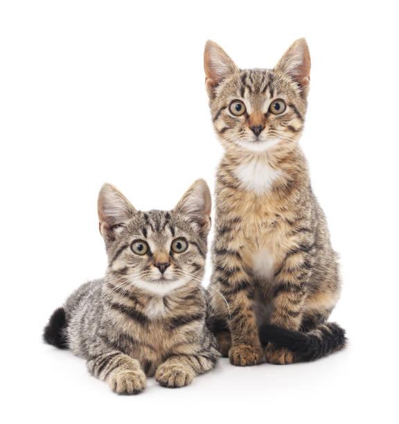 Two little kittens picture id675661298?b=1&k=6&m=675661298&s=612x612&w=0&h=lw2er1hxj63kpn7psajvwi2bhcjxju0kwp 2x wg5zc=