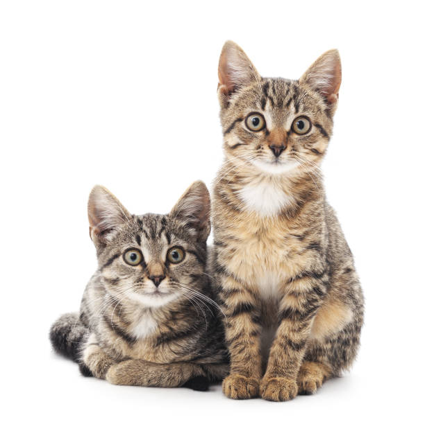 Two little kittens. stock photo